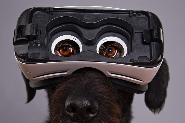 Come Si Usa Un Visore Di Realtà Virtuale Per Smartphone?